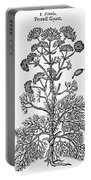 Botany: Giant Fennel, 1597 Portable Battery Charger
