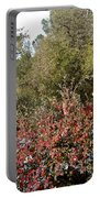 Bottlebrush In Sierra Nevada Foothills In Winter In Park Sierra-ca Portable Battery Charger