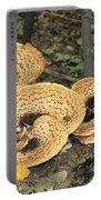 Bracket Fungi Portable Battery Charger