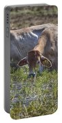 Brahman Cattle At The Waterhole Portable Battery Charger