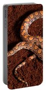 Brazilian Rainbow Boa Portable Battery Charger