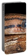 Brazilian Rainbow Boa Epicrates Cenchria Portable Battery Charger