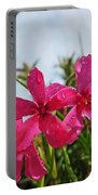 Bright Phlox Blooms Portable Battery Charger