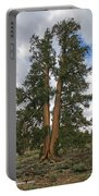 Brisslecone Pine Tree Portable Battery Charger