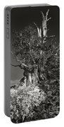 Bristlecone And Wildflowers In Black And White Portable Battery Charger