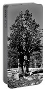 Bristlecone Pine Portable Battery Charger