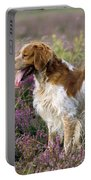 Brittany Dog, Standing In Heather, Side Portable Battery Charger