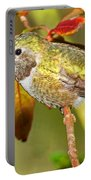 Broad Tailed Hummingbird Portable Battery Charger