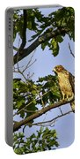 Broad Winged Hawk Portable Battery Charger