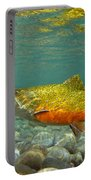 Brook Trout And Royal Coachman Portable Battery Charger