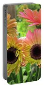 Brown Eyed Gerbera Daisies Portable Battery Charger