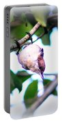 Brown-headed Nuthatch 9173-006 Portable Battery Charger