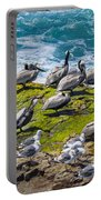 Brown Pelicans Portable Battery Charger