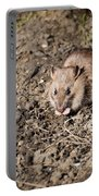 Brown Rat Portable Battery Charger