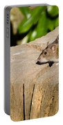 Brown Rat On Log Portable Battery Charger