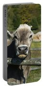 Brown Swiss Cow Portable Battery Charger