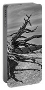 Bryce Canyon Tree Art Portable Battery Charger