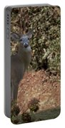 Buck Portable Battery Charger