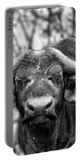 Buffalo Stare In Black And White Portable Battery Charger