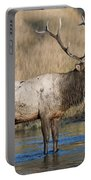 Bull Elk On The Madison River Portable Battery Charger