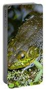 Bullfrog Portable Battery Charger