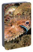 Burrfish And Cleaner Goby Portable Battery Charger