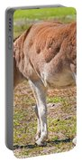 Burro Equus Asinus Portable Battery Charger