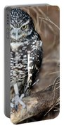 Burrowing Owl  Portable Battery Charger