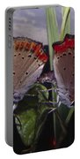 Butterfly 001 Portable Battery Charger