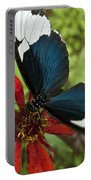 Butterfly Sara Longwing II Portable Battery Charger