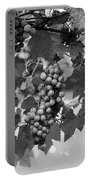 Bw Hanging Thompson Grapes Sultana Poster Look Portable Battery Charger