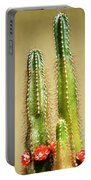 Cactus Towers Portable Battery Charger
