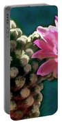 Cactus With Pink Sunlit Bloom Portable Battery Charger