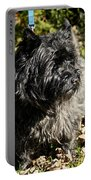 Cairn Terrier Portrait Portable Battery Charger