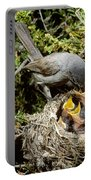 California Gnatcatcher Feeding Young Portable Battery Charger