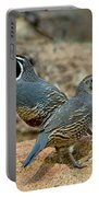 California Quail Pair On Rock Portable Battery Charger