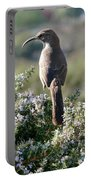 California Thrasher On Rosemary Portable Battery Charger