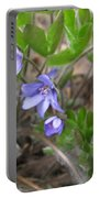Calling Spring Portable Battery Charger