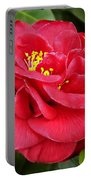 Camellia Japonica ' Dixie Knight ' Portable Battery Charger