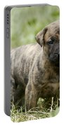 Canary Dog Puppy Portable Battery Charger
