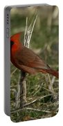 Cardinal In The Field Portable Battery Charger