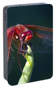 Cardinal Meadowhawk Dragonfly Portable Battery Charger