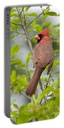 Cardinal Pictures 123 Portable Battery Charger
