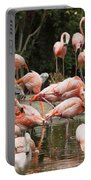 Caribbean Flamingos - Phoenicopterus Ruber Ruber Portable Battery Charger
