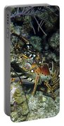 Caribbean Reef Lobster On Night Dive Portable Battery Charger