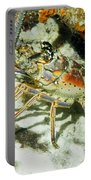Caribbean Spiny Reef Lobster  Portable Battery Charger