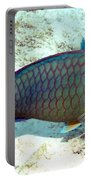 Caribbean Stoplight Parrot Fish In Rainbow Colors Portable Battery Charger