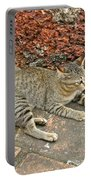 Cat At Wat Mahathat In 13th Century Sukhothai Historical Park-th Portable Battery Charger