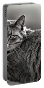 Cat In Window Portable Battery Charger
