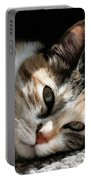 Cat Napping In The Sun By David Perry Portable Battery Charger